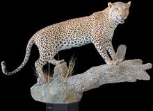leopard-on-log-02