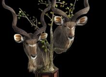 Double Kudu Pedestal Mount
