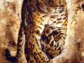 leopard-running