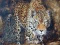 stalking-leopard