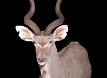 kudu finesse mount