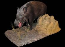 Bushpig fullmount-black