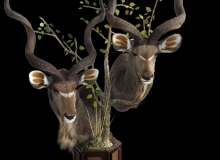 Double Kudu Pedestal Mount