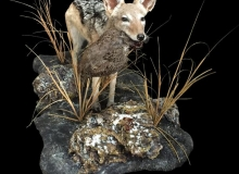 Jackal full mount with francolin
