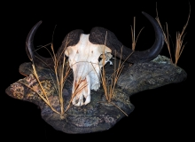 Buffalo skull on custom base