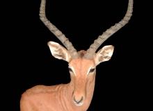 Impala Finesse Mount