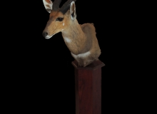 Bushbuck pedestal mount on hexagonal base