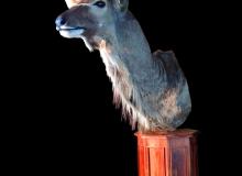 Kudu pedestal mount on octagonal base