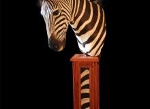 Zebra pedestal mount on