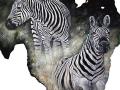ear-zebras