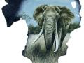 belinda-marshall-bull-elephant