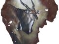belinda-marshall-eland