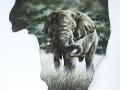 belinda-marshall-elephant
