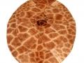 Oval rug - giraffe