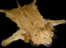lion-rug