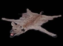 Hyena rug mount