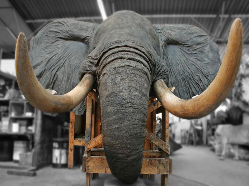 Elephant shoulder mount