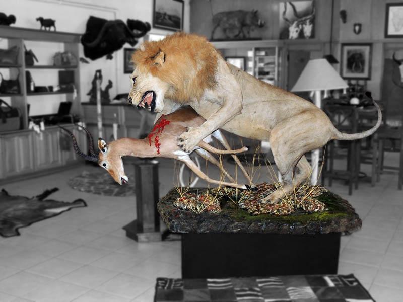Lion and Impala fullmount