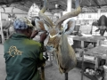 kudu and worker