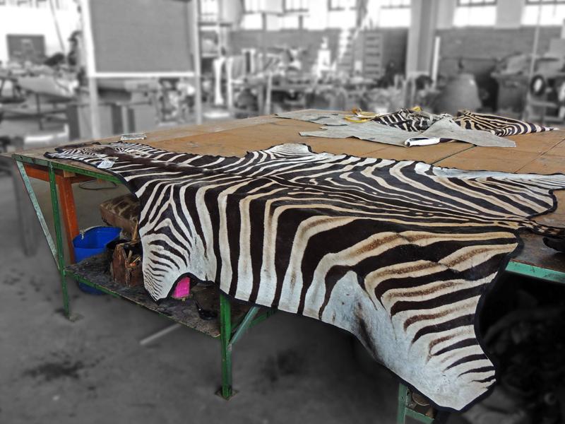 Zebra rug mount in the making