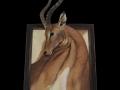 Impala toile