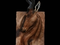 Hartebeest toile