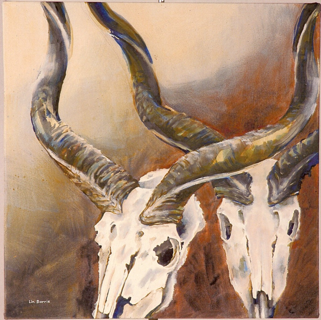 kudu skull studies 80 by 80 (3)