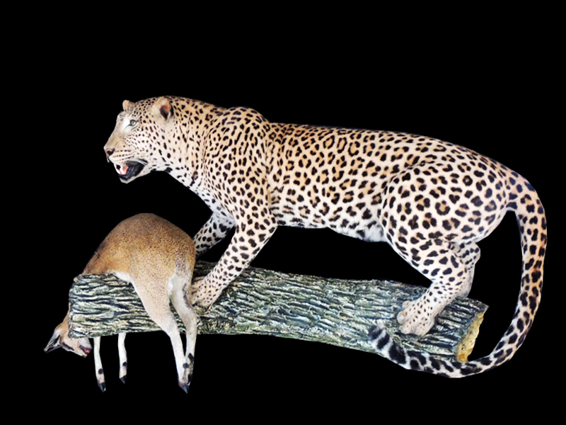 leopard and klipspringer