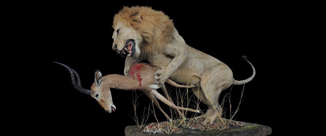 Lion & Impala Full Mount